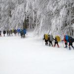 Inverno: Il Bosco Addormentato   Trekking.it